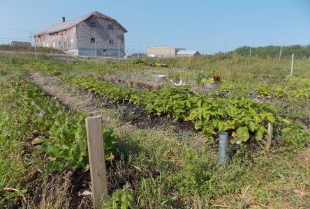 Un jardin communautaire à Port-Menier