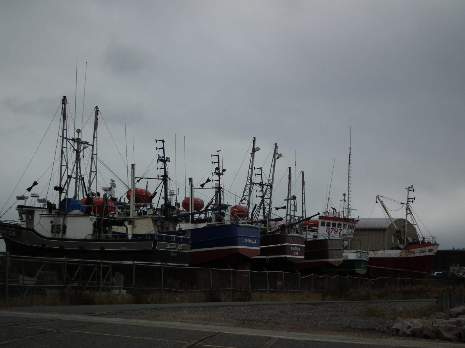Pêche sportive en mer : des pêcheurs commerciaux inquiets