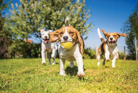 Mini-Pattes de l'espoir: Les chiens à l'honneur