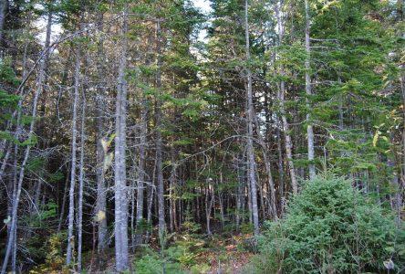 Alain Thibault dépose ses recommandations pour la réforme à venir du régime forestier québécois