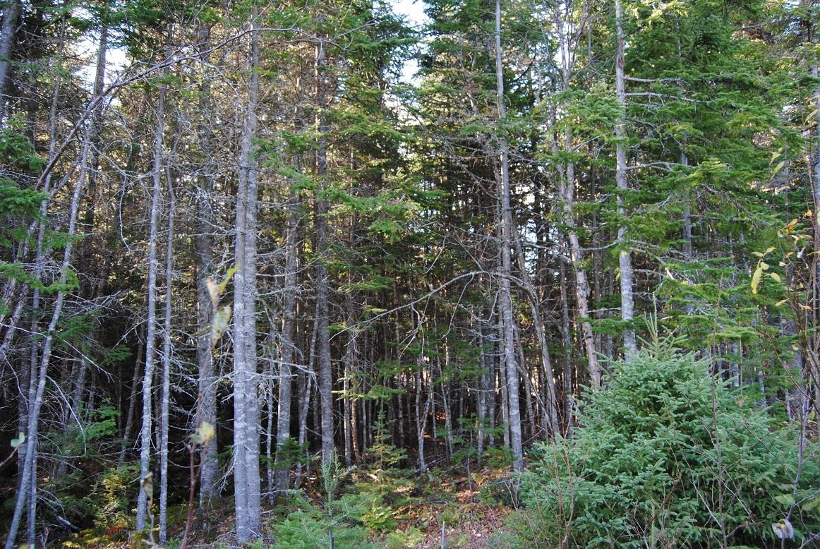 Interdiction des feux à ciel ouvert en forêt