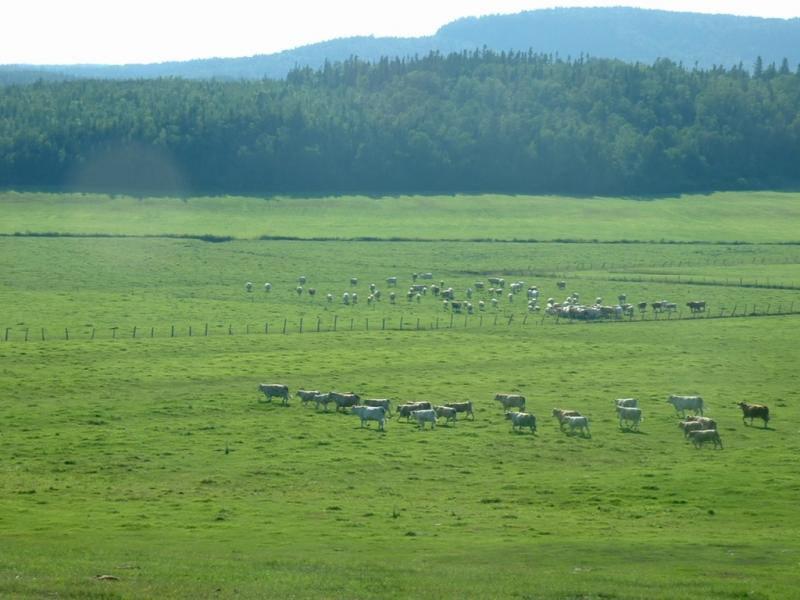 Un producteur bovin prend les rênes de la Table bioalimentaire