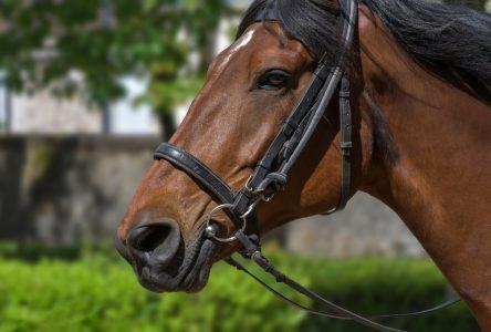Un cheval dans les rues de Port-Cartier