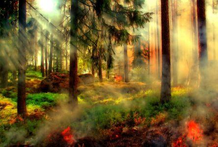 Le risque de feux de forêt va encore augmenter