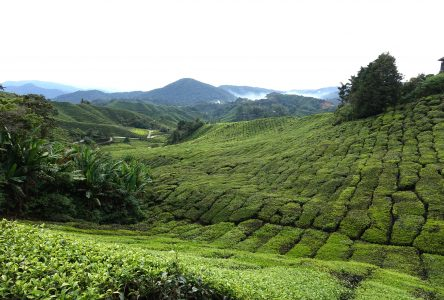 La Malaisie occidentale : à la fois rurale et urbaine