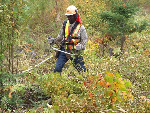 L'industrie forestière ne veut plus attendre à la dernière minute avant de prévoir