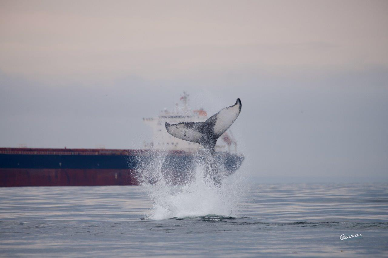 L'univers fascinant des mammifères marins