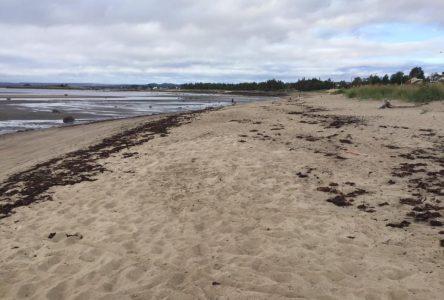 Un nouveau projet pour la protection de la plage Rochelois à Port-Cartier sera proposé